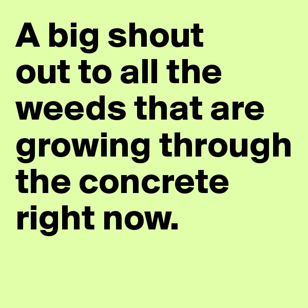 A big shout  out to all the weeds that are growing through the concrete right now.