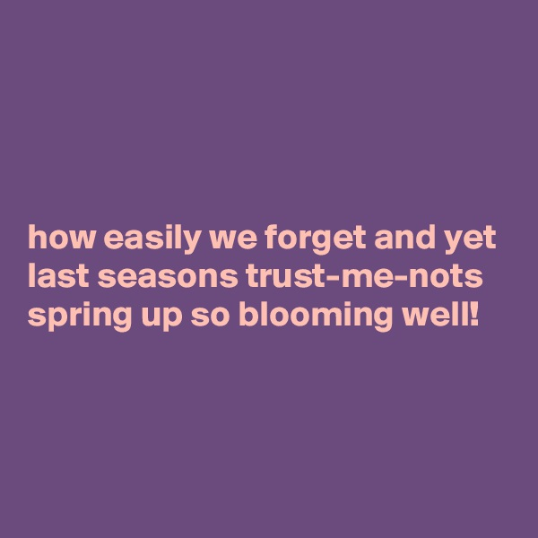 how easily we forget and yet last seasons trust-me-nots spring up so blooming well!