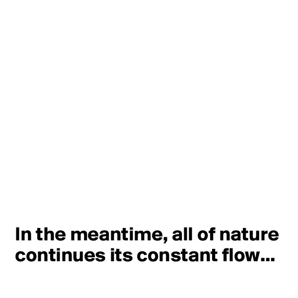 In the meantime, all of nature continues its constant flow...