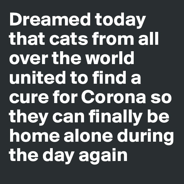 Dreamed today that cats from all over the world united to find a cure for Corona so they can finally be home alone during the day again