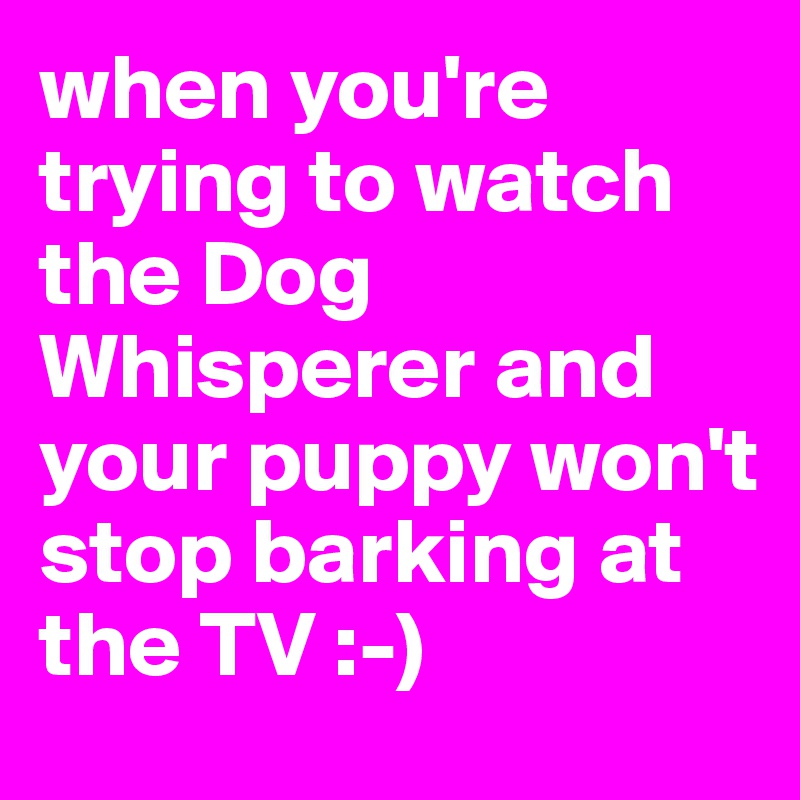when you're trying to watch the Dog Whisperer and your puppy won't stop barking at the TV :-)