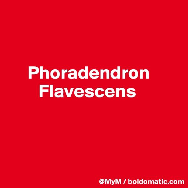 Phoradendron                      Flavescens