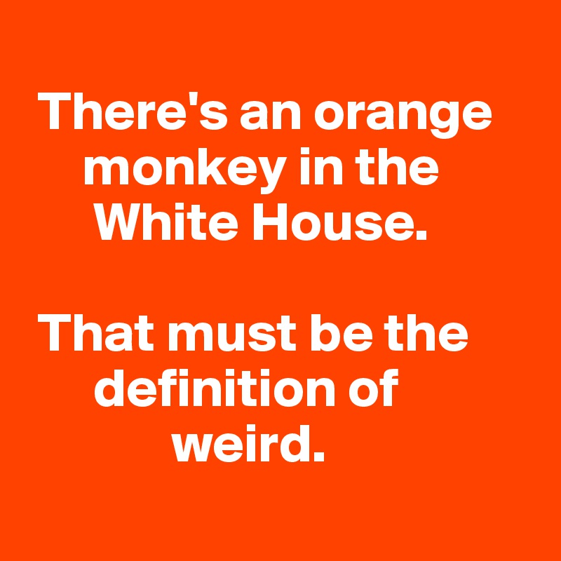 There's an orange       monkey in the        White House.    That must be the        definition of               weird.