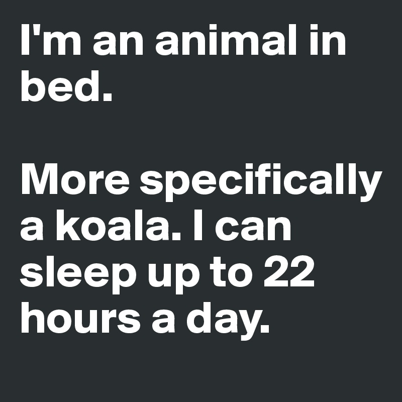 I'm an animal in bed.   More specifically a koala. I can sleep up to 22 hours a day.
