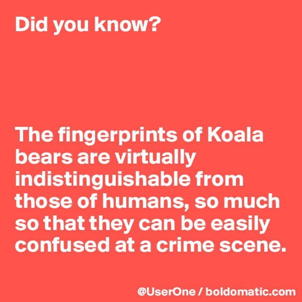 Did you know?     The fingerprints of Koala bears are virtually indistinguishable from those of humans, so much so that they can be easily confused at a crime scene.