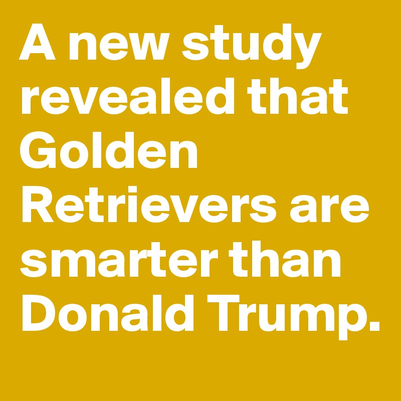 Image result for donald trump golden retriever