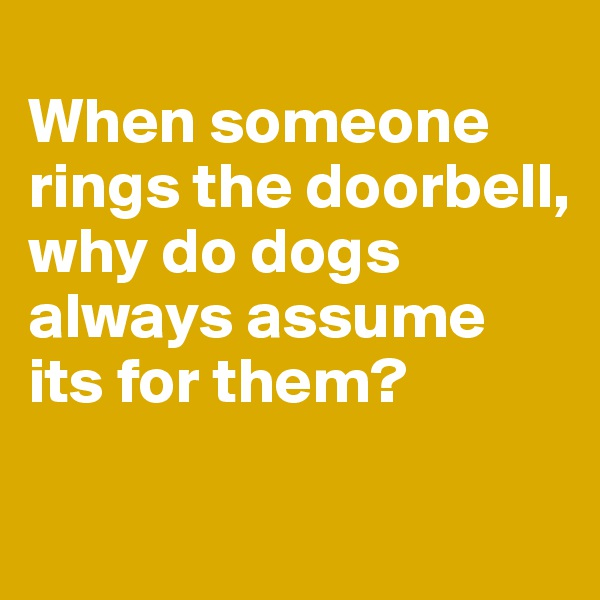 When someone rings the doorbell, why do dogs always assume its for them?