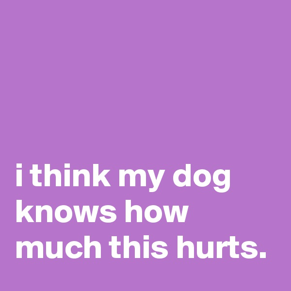 i think my dog knows how much this hurts.