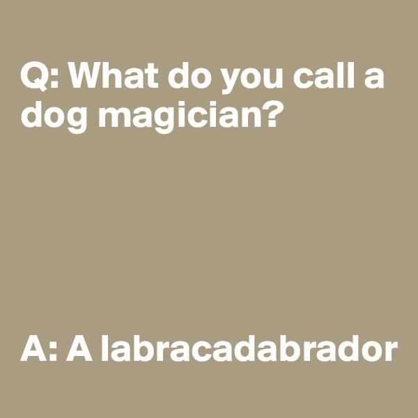 Q: What do you call a dog magician?       A: A labracadabrador