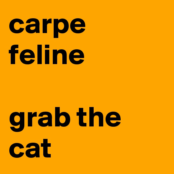carpe feline  grab the cat