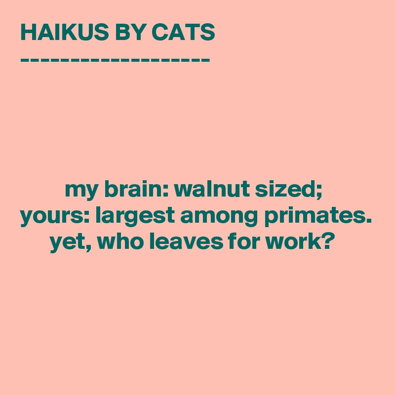 HAIKUS BY CATS -------------------              my brain: walnut sized; yours: largest among primates.       yet, who leaves for work?
