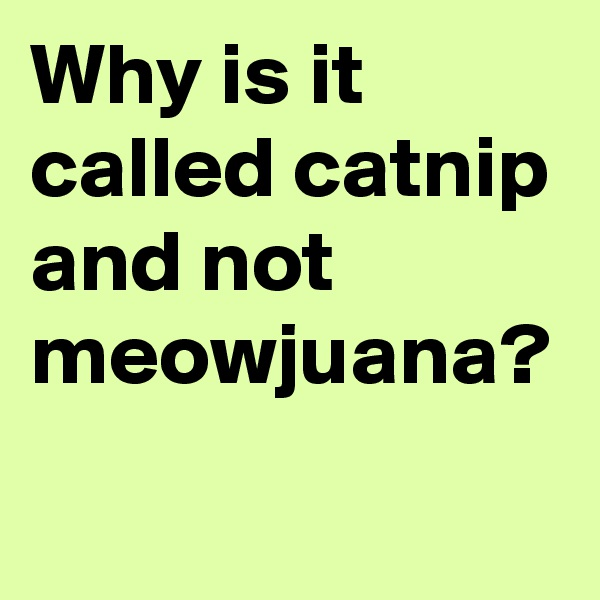 Why is it called catnip and not meowjuana?