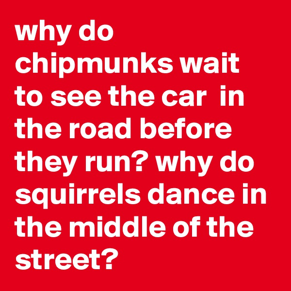why do chipmunks wait to see the car  in the road before they run? why do squirrels dance in the middle of the street?