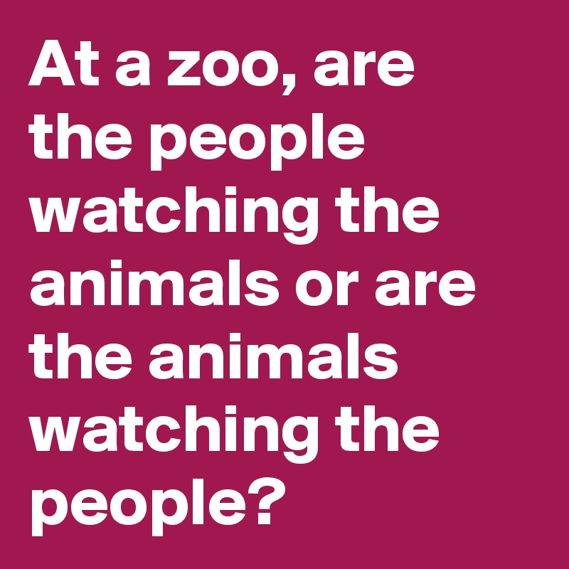 At a zoo, are the people watching the animals or are the animals watching the people?