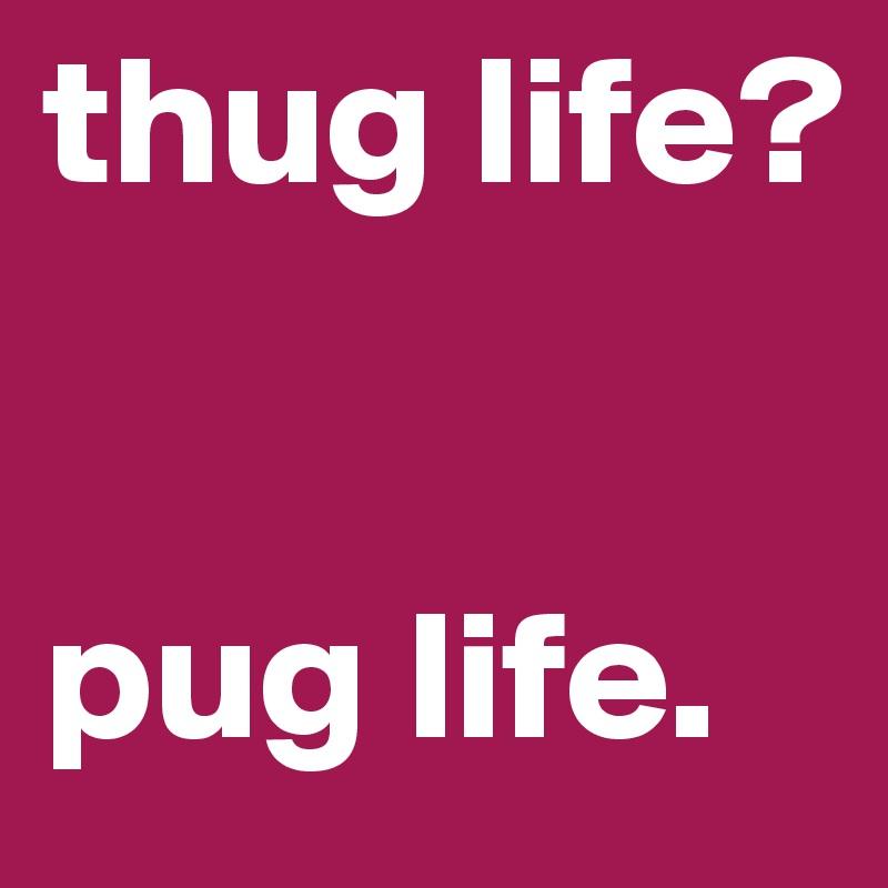 thug life?   pug life.