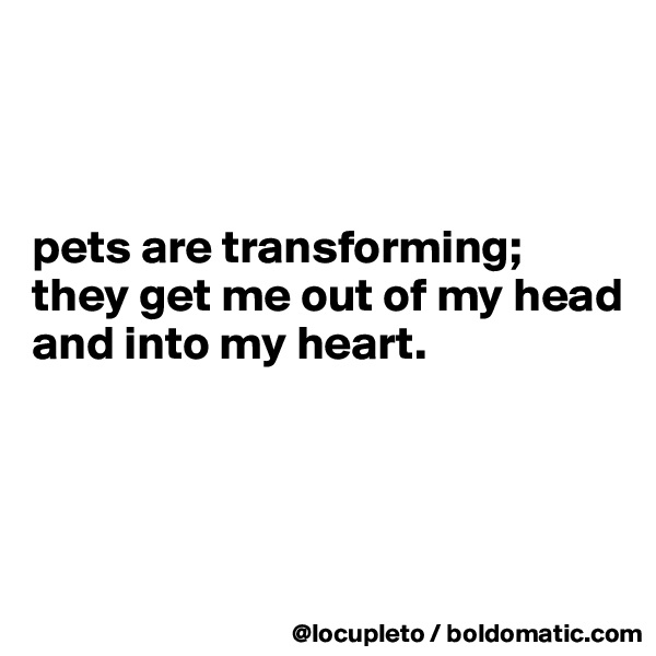 pets are transforming; they get me out of my head and into my heart.
