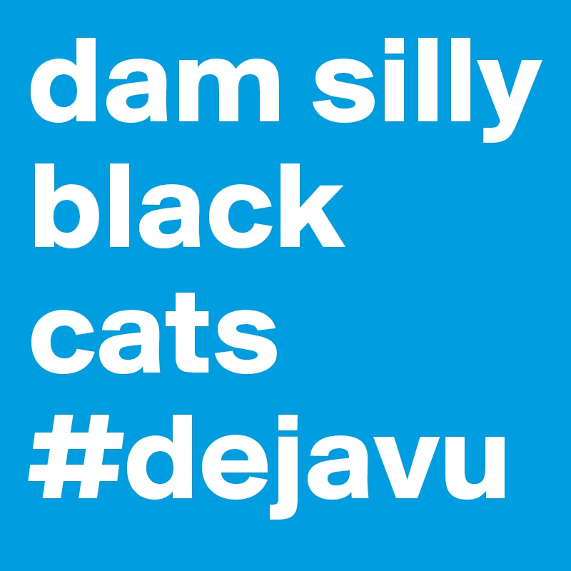 dam silly black cats #dejavu