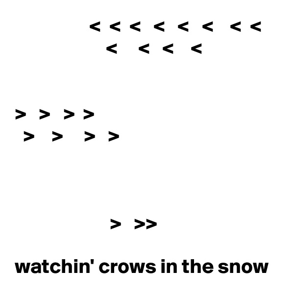 <  <  <   <   <   <    <  <                          <     <   <    <      >   >   >  >   >    >     >   >                                                                                         >   >>  watchin' crows in the snow