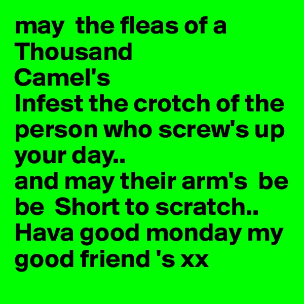may  the fleas of a Thousand Camel's Infest the crotch of the person who screw's up your day.. and may their arm's  be be  Short to scratch.. Hava good monday my good friend 's xx