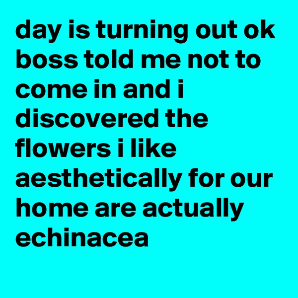 day is turning out ok boss told me not to come in and i discovered the flowers i like aesthetically for our home are actually echinacea