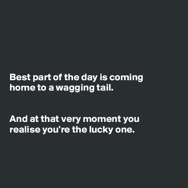 Best part of the day is coming home to a wagging tail.   And at that very moment you realise you're the lucky one.