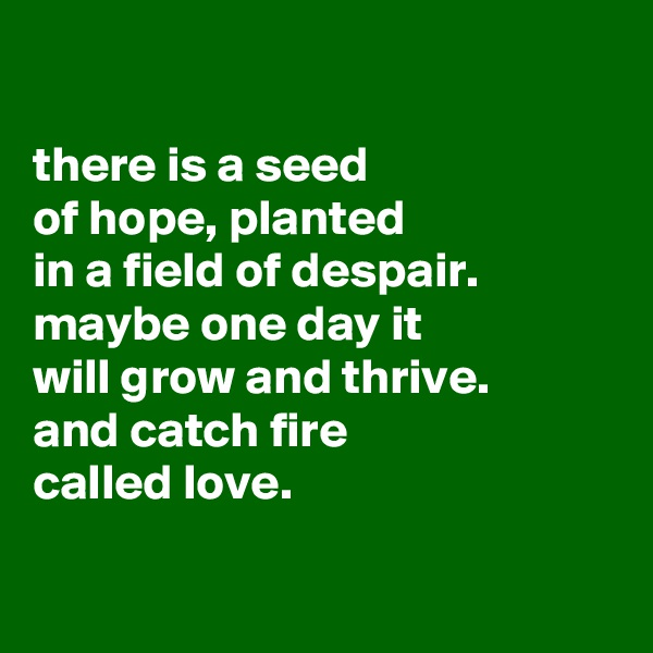 there is a seed of hope, planted in a field of despair. maybe one day it will grow and thrive. and catch fire called love.
