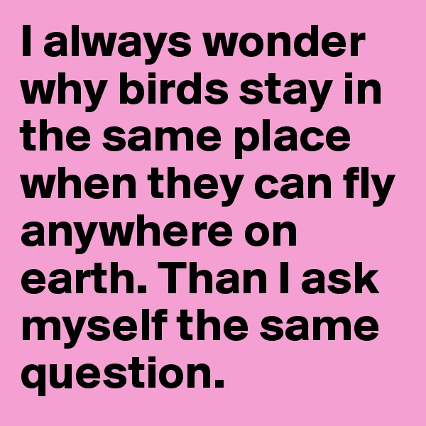 I always wonder why birds stay in the same place when they can fly anywhere on earth. Than I ask myself the same question.