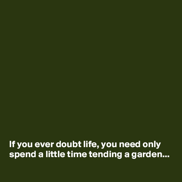 If you ever doubt life, you need only spend a little time tending a garden...