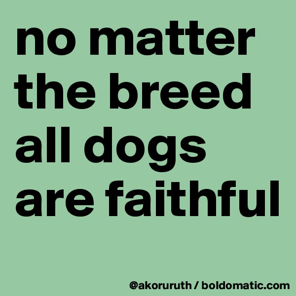 no matter the breed all dogs are faithful