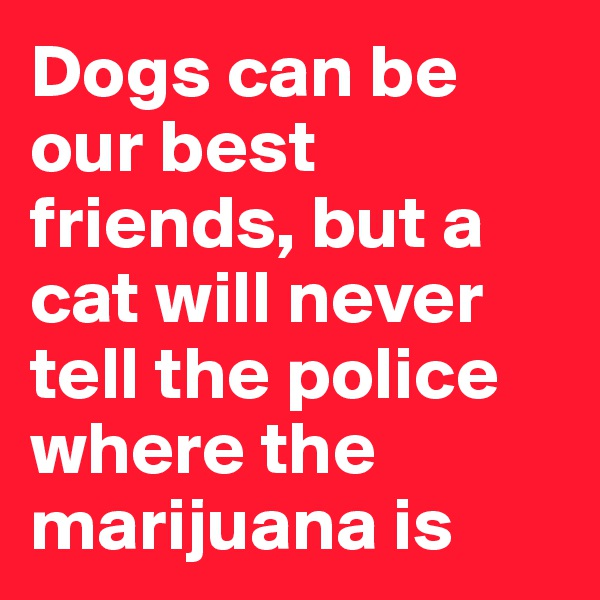 Dogs can be our best friends, but a cat will never tell the police where the marijuana is