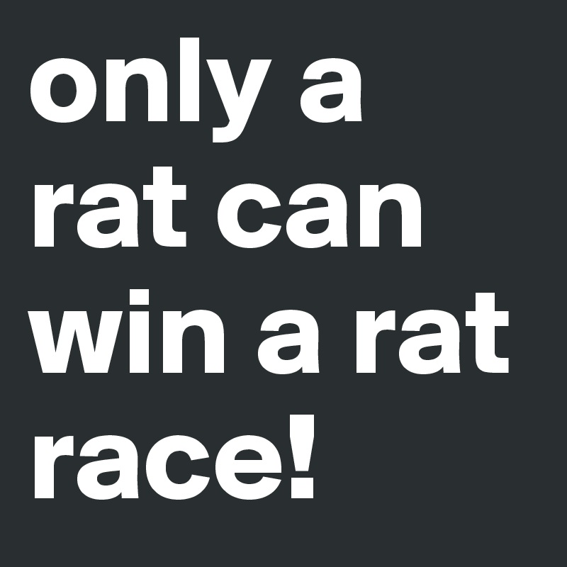 only a rat can win a rat race!