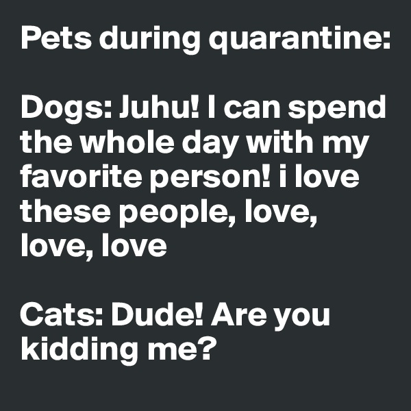 Pets during quarantine:  Dogs: Juhu! I can spend the whole day with my favorite person! i love these people, love, love, love  Cats: Dude! Are you kidding me?