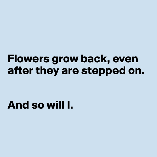 Flowers grow back, even after they are stepped on.    And so will I.