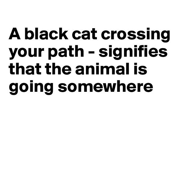 A black cat crossing your path - signifies that the animal is going somewhere