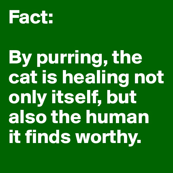 Fact:  By purring, the cat is healing not only itself, but also the human it finds worthy.