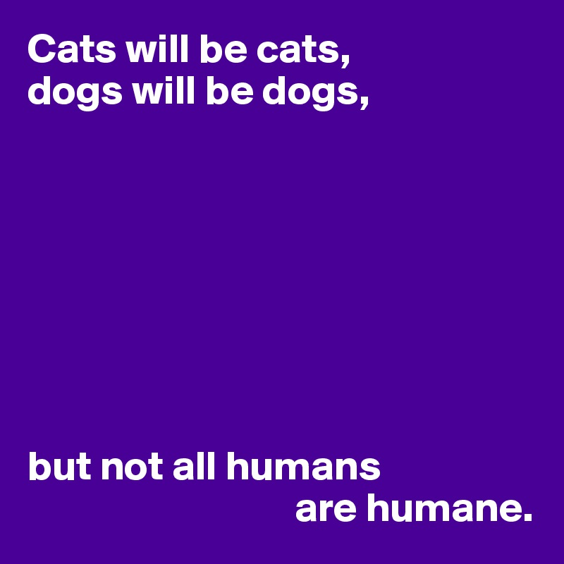 Cats will be cats, dogs will be dogs,         but not all humans                                 are humane.
