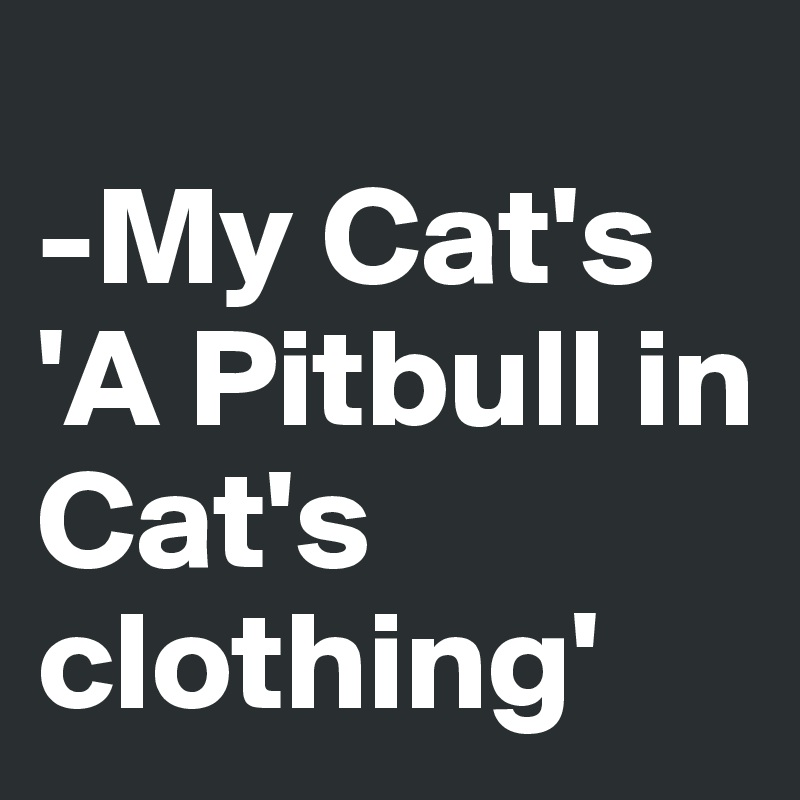 -My Cat's 'A Pitbull in Cat's clothing'