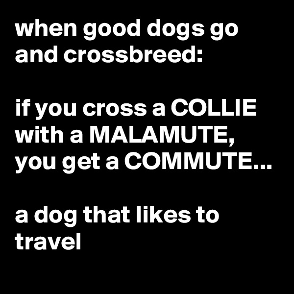 when good dogs go and crossbreed:  if you cross a COLLIE with a MALAMUTE, you get a COMMUTE...  a dog that likes to travel