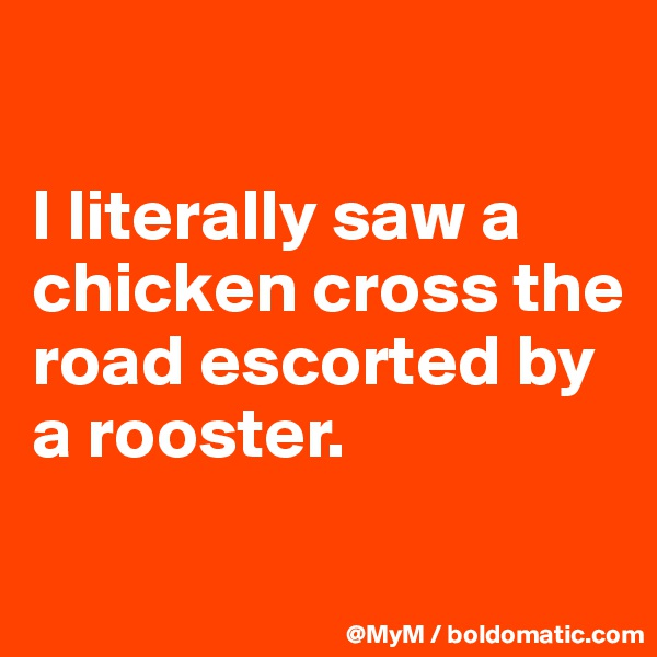 I literally saw a chicken cross the road escorted by a rooster.