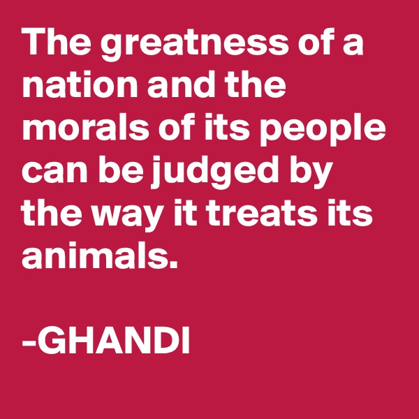 The greatness of a nation and the morals of its people can be judged by the way it treats its animals.    -GHANDI