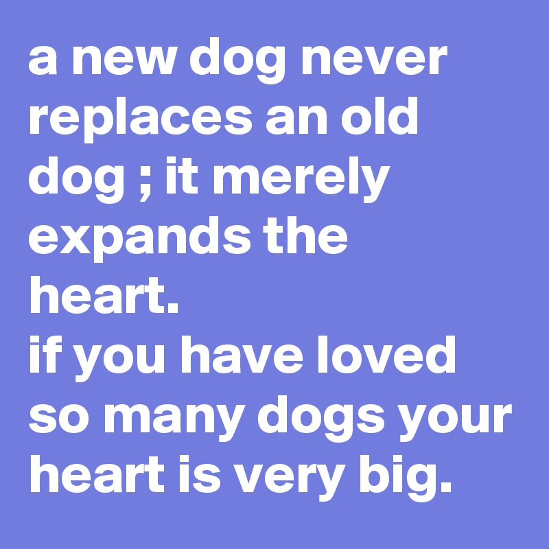 a new dog never replaces an old dog ; it merely expands the heart.  if you have loved so many dogs your heart is very big.