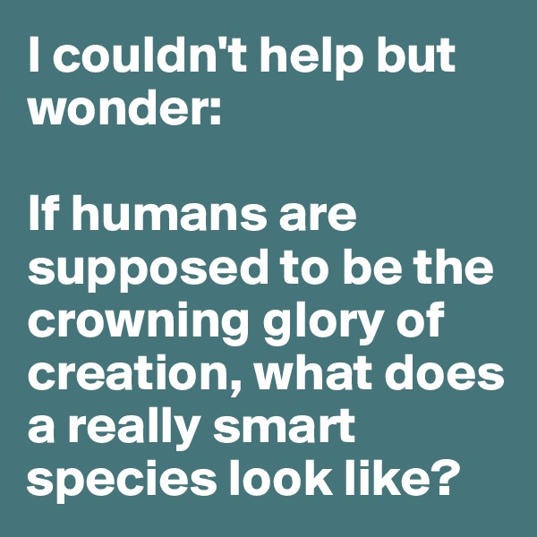 I couldn't help but wonder:  If humans are supposed to be the crowning glory of creation, what does a really smart species look like?