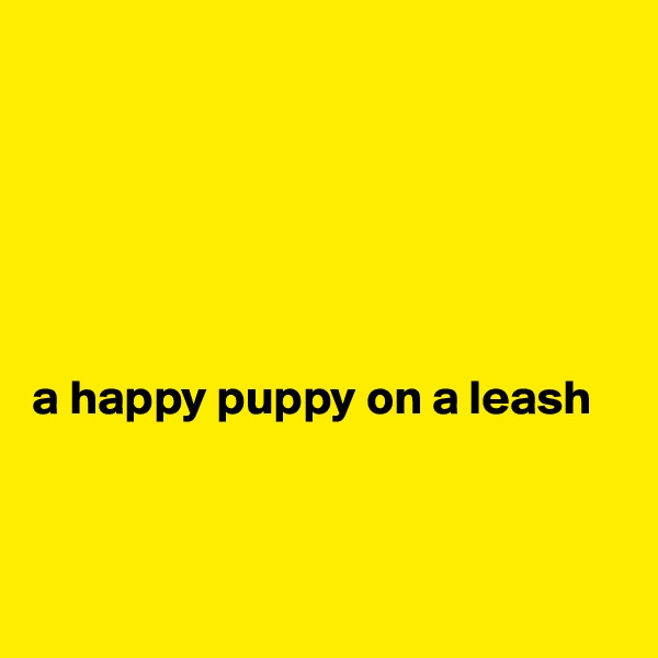 a happy puppy on a leash