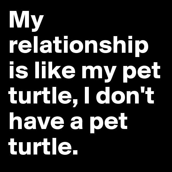 My relationship is like my pet turtle, I don't have a pet turtle.