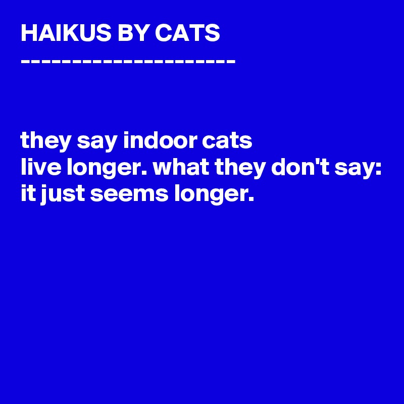HAIKUS BY CATS ---------------------   they say indoor cats live longer. what they don't say: it just seems longer.