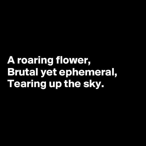 A roaring flower,  Brutal yet ephemeral,  Tearing up the sky.
