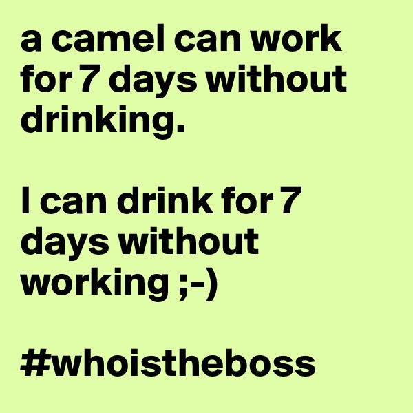 a camel can work for 7 days without drinking.  I can drink for 7 days without working ;-)  #whoistheboss