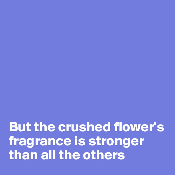 But the crushed flower's fragrance is stronger than all the others