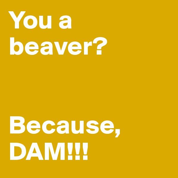 You a beaver?    Because, DAM!!!