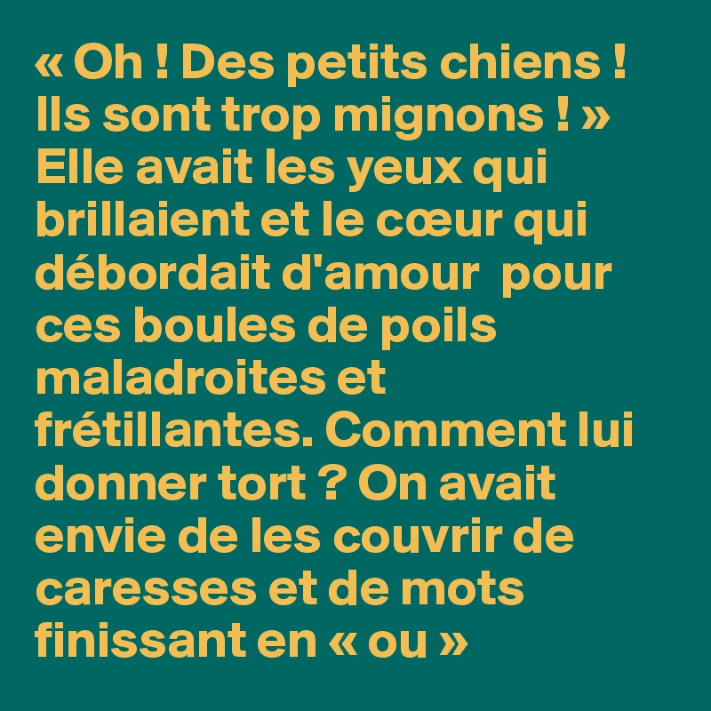 Oh Des Petits Chiens Ils Sont Trop Mignons Elle